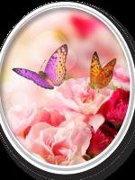 listing-box-image